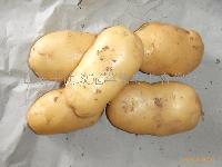 荷兰七号土豆