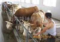 鲁西黄牛养殖技术