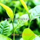 绿茶提取物  茶多酚  绿茶粉