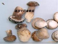 速凍牛肝菌整菇