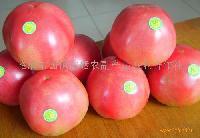 綠色富硒番茄