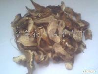野生大腿菌