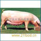 二元小母猪