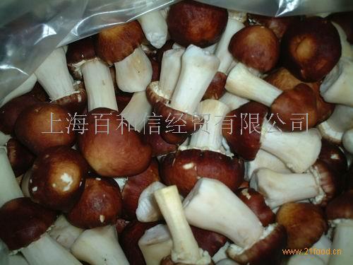 鲜大球盖菇