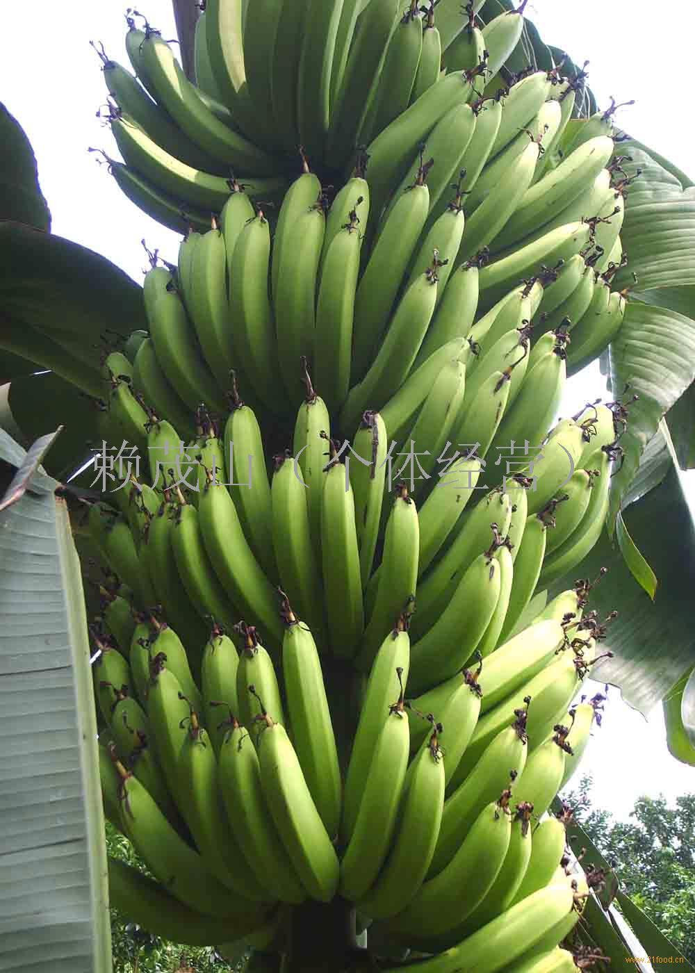 香蕉煮伊手机一区 大香区煮伊2021免费