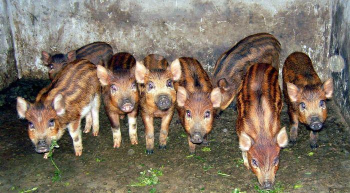 阿坝州庆宇特种动物养殖场-商业机会